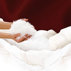 Edle Daunenbetten, Kopfkissen und eine moderne Bettenreinigung